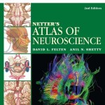 Netter's Atlas of Neuroscience, 2nd Edition with STUDENT CONSULT Online Access