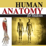 Human Anatomy for Students, 2nd Edition