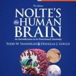 Nolte's the Human Brain  :  An Introduction to Its Functional Anatomy, 7th Edition