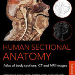 Human Sectional Anatomy: Atlas of Body Sections, CT and MRI Images, Fourth Edition