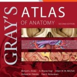 Gray's Atlas of Anatomy: with STUDENT CONSULT Online Access 2nd Edition